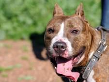 Hond met gecoupeerde oren of staart? Waarschuw de gemeente