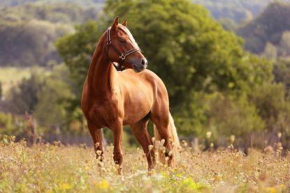 Franse politie onderzoekt gruwelijke paardenmoorden