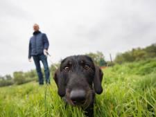 Weidevogels hebben rust nodig: 'Lijn je hond aan als je door de polder loopt'