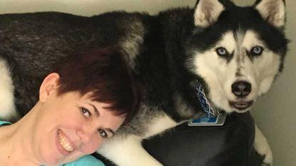 """""""Ze had het altijd bij rechte eind"""": husky stelt drie keer kanker vast bij baasje en redt haar telkens het leven"""