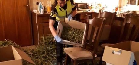 Tien arrestaties na ontdekking grote hennepknipperij in Beek en Donk, verdachten proberen te vluchten
