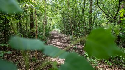 Amper bos bijgekomen in Vlaanderen sinds 2000