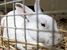 Dood konijntje met bebloed voorwerp gevonden in water: 'Dit zijn zieke geesten'