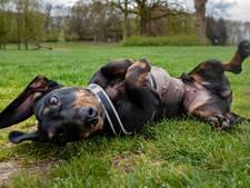 Verhuizing Hondenspeelpark in Alphen uitgesteld: 'We snakken naar duidelijkheid'