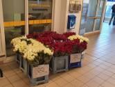 1.500 rozen voor helden van de zorg: UZ kan stilaan zelf Floraliën organiseren