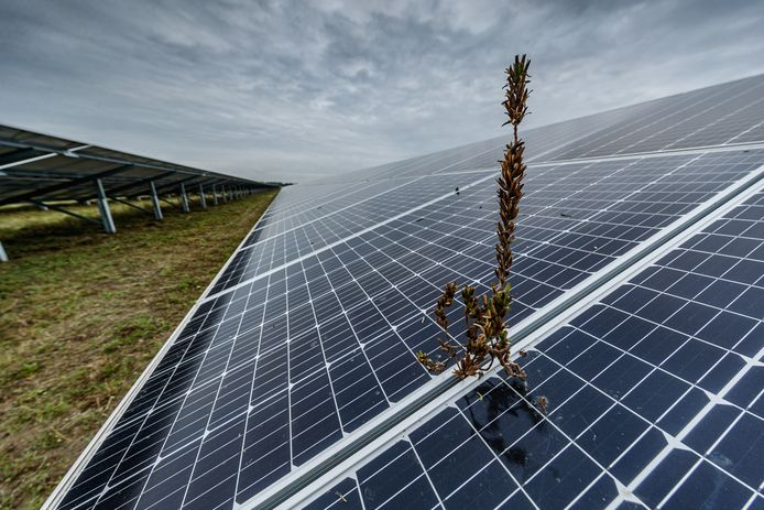 De natuur blijkt het erg goed te doen rond en onder de zonnepanelen van Shell Moerdijk.