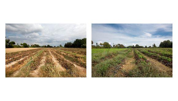 Tijdens en na de droogte in Alken.