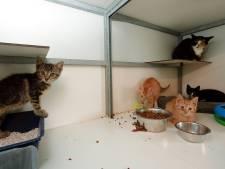 Corona raakt West-Brabantse dierenopvangen met lege pensions, dierenwinkels profiteren juist