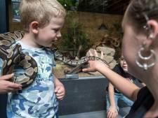 Bij dierentuin De Aarde in Breda draait alles om reptielen