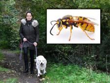 Puppy en baasje aangevallen door zwerm wespen, maar gemeente wil nest niet verwijderen