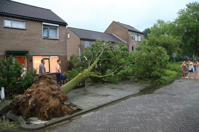 Een omgewaaide boom aan de Baroniehof in Helmond.