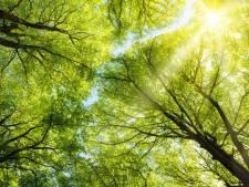 Gratis boom voor inwoners van Dichteren en Wijnbergen