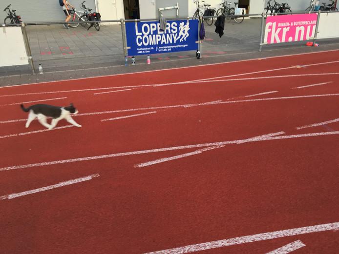 De kat op de atletiekbaan van AV'56 in Goes.