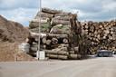 Stammen 'incourant hout' liggen klaar om te worden opgestookt in de biomassacentrale in Cuijk