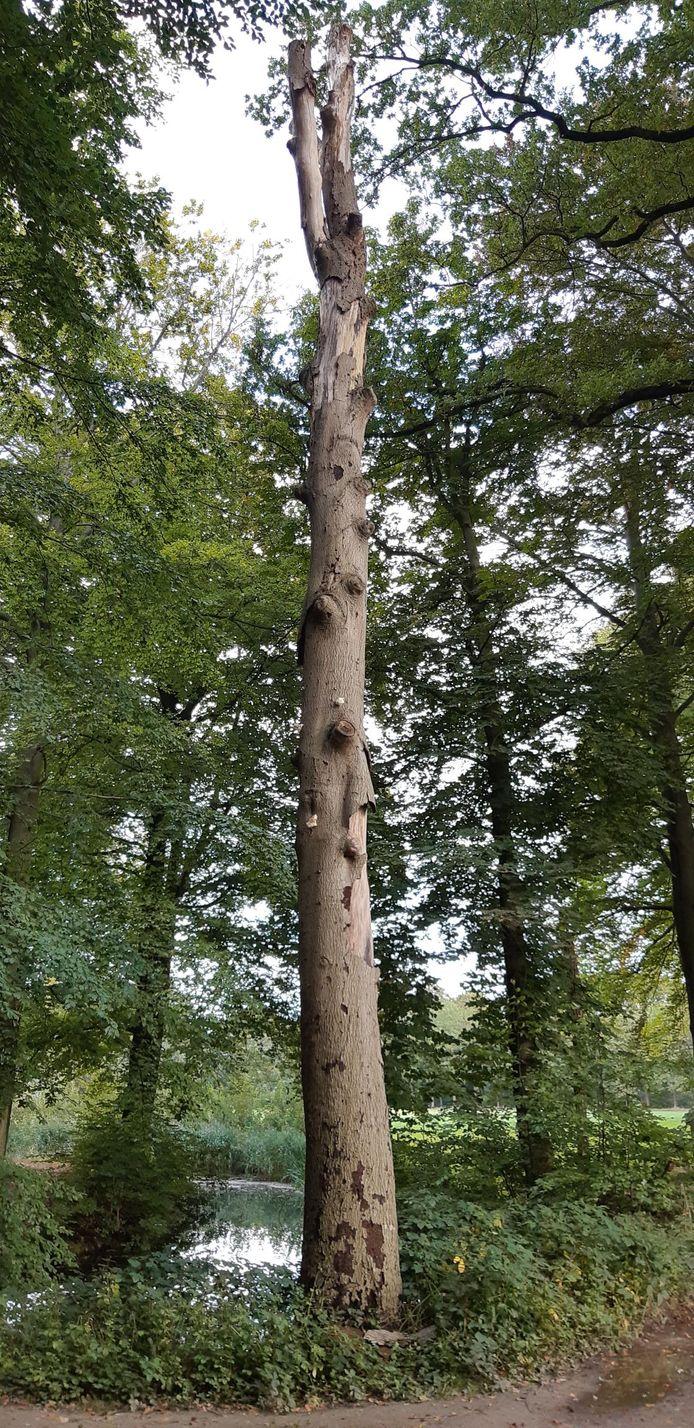Een van de dode bomen op Landgoed De Eversberg.