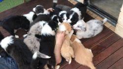 Dé droom van elke hondenliefhebber: bedolven worden onder puppy's