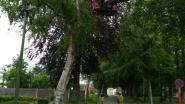 Tientallen bomen en takken om- en afgewaaid