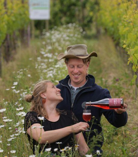 Ondanks hitte kan 2020 prachtig Betuws wijnjaar worden, wel extra beregening