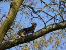 Kat springt uit boom tijdens reddingsactie van brandweer in Steenwijk