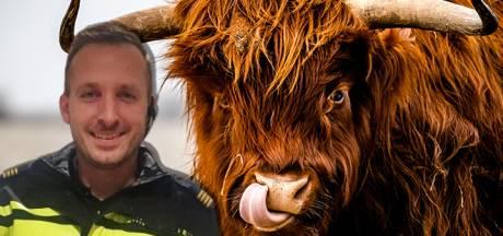 Agent Mervin (47) redde angstig stelletje bij Schotse hooglanders in Biddinghuizen: 'Ze stonden ruim een uur op een bruggetje'