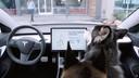 Tesla houdt honden in leven dankzij Dog Mode