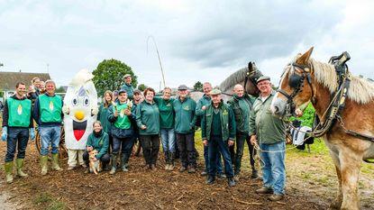Trekpaardenvereniging Den Brabander viert 20-jarig bestaan