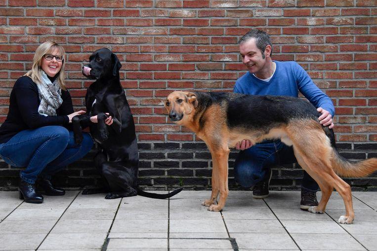 Kristel Blommaert en haar man Mario De Vadder adopteerden zelf twee verwaarloosde honden uit Spanje.