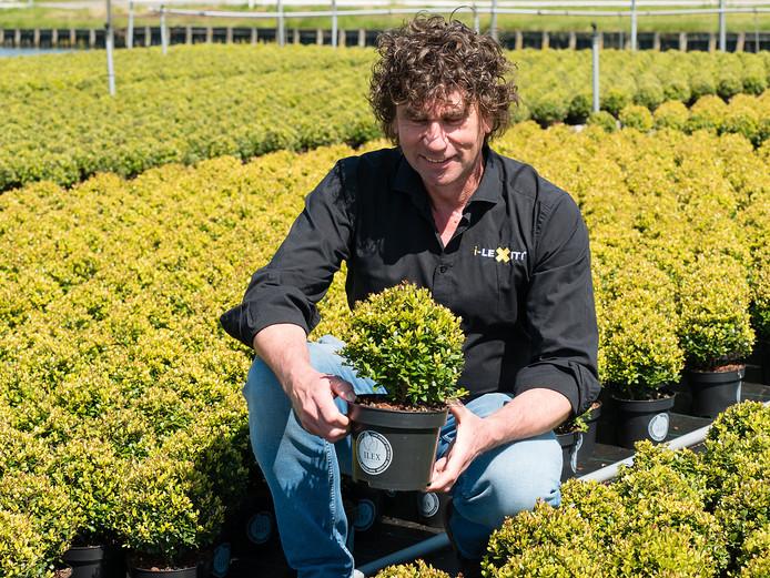 Ronald Stolwijk op zijn kwekerij aan de Reijerscoop in Boskoop met zijn Ilex crenata 'Dark Green', een goede vervanger voor de buxus.
