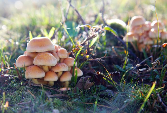 toppunt van herfstkleuren: paddenstoelen