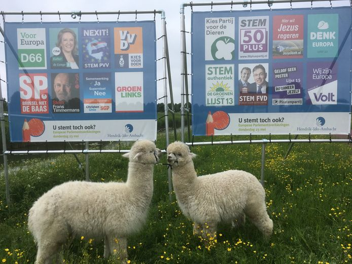 Een dag voor de Europese verkiezingen waren alpaca's Ohio en Kwint uit Hendrik-Ido-Ambacht het nog niet eens. ,,Op wie moeten we toch gaan stemmen?''