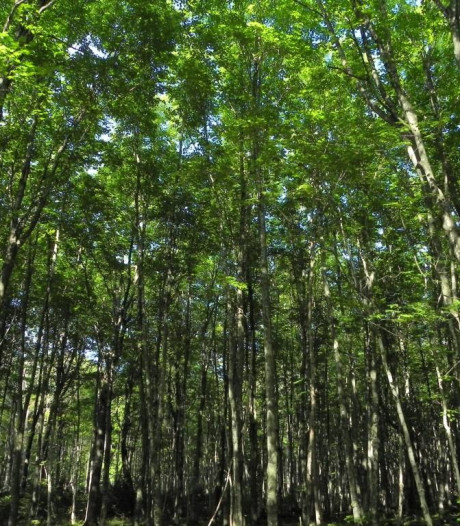Gemeente Bergeijk: 'Stortplaats Dopheidedreef vormt geen risico'