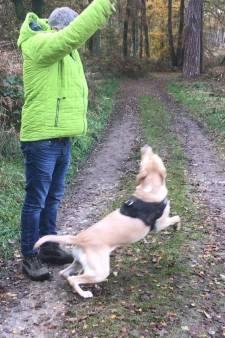 'Er is niks mooiers dan met de hond het bos in!'