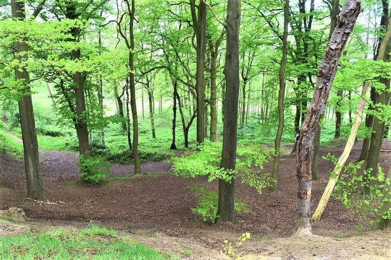Volgens de Partij Groen moeten er meer bomen aangeplant worden in  het Pajottenalnd