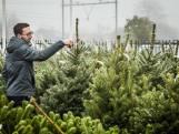 Kerstbomen huren is de nieuwe hype