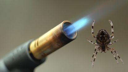 Man probeert spin te doden met steekvlam… en laat per ongeluk zijn huis afbranden