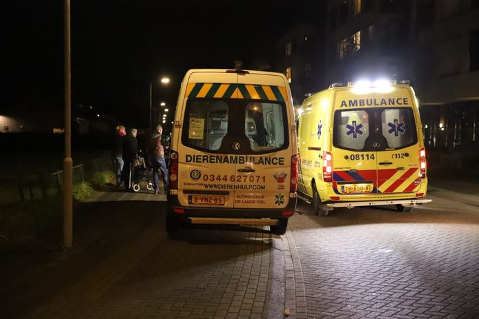 Er werden verschillende ambulances opgeroepen.