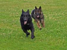 Hondenuitlaatservices op sommige recreatiegebieden vanaf april 2021 verboden