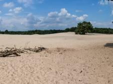 Ons Eemland: 'Er leven hier nu zo'n 25.000 zandhagedissen'
