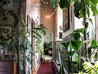 Ben jij ook gek op groen? Dit boek toont de mooiste planteninterieurs én leert je alles over de verzorging