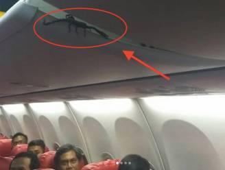 VIDEO. Vliegtuigpassagiers schrikken omdat er schorpioen boven hun hoofd hangt
