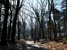 Rust zoeken op landgoed Lindonk is als genieten in een 'levend schilderij'