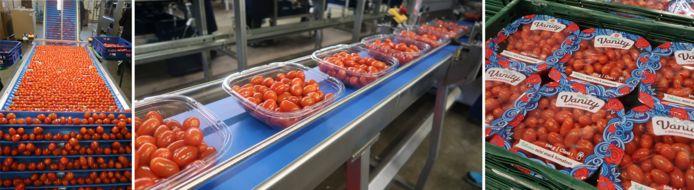 Tomatenspecialist RedStar uit De Lier gebruikt door speciale bakjes veertig procent minder plastic.