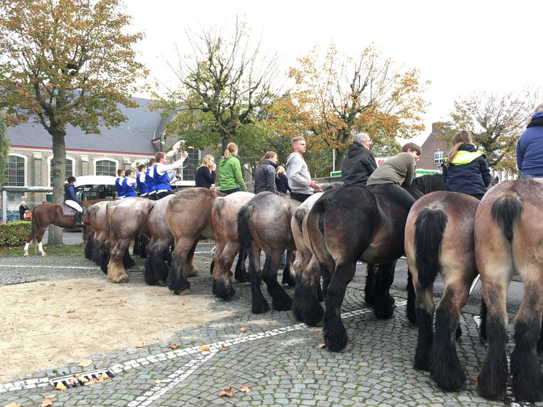 Dierenwijding in Oostakker: veel trekpaarden en zelfs jachthoornblazers.