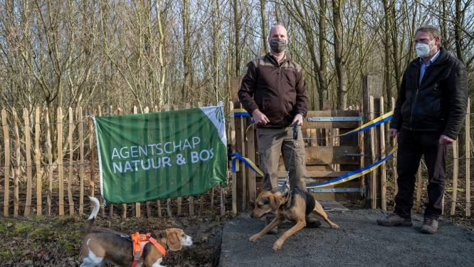 Voortaan ook losloopzone voor honden in Buggenhout Bos
