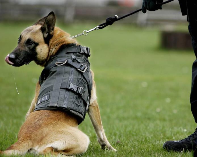 Een politiehond tijdens een training. foto Rick Nederstigt/ANP