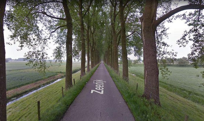 Bomen aan de Zeedijk in Dordrecht.
