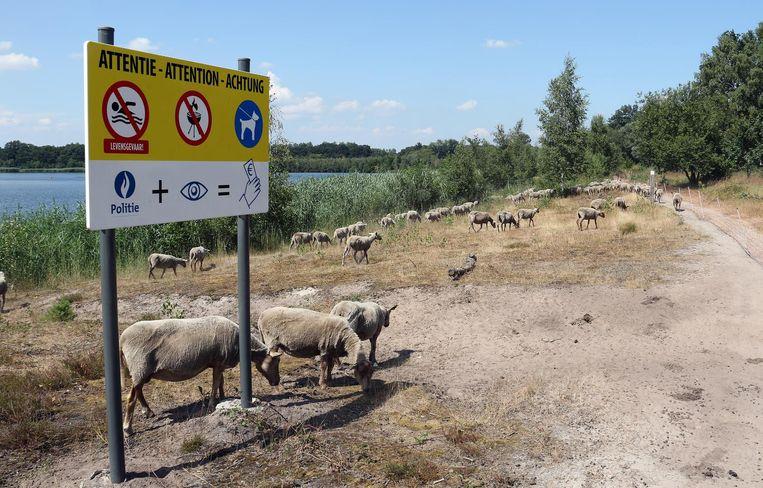De schapen van Kamp vzw.