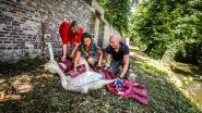 Aangevallen koppel zwanen is terug vrij, ze krijgen plekje in Sebrechtspark