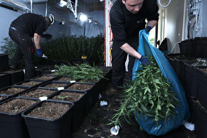 In de woning aan de Marnixstraat in Crooswijk werd een wietkwekerij met 259 planten ontmanteld.