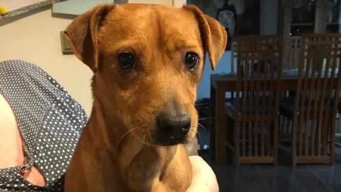 """Hondje Paco al drie weken vermist: """"Hij was nog maar een week bij ons"""""""